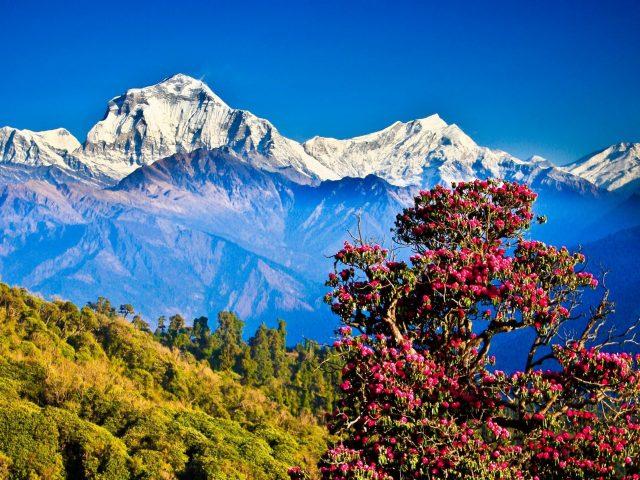 Nepal-discover-himalayan-treks
